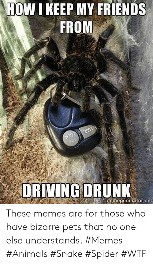 Bizarre: HOW I KEEP MY FRIENDS  FROM  LOCK  LOCK  memegenerator.net  DRIVING DRUNK These memes are for those who have bizarre pets that no one else understands. #Memes #Animals #Snake #Spider #WTF