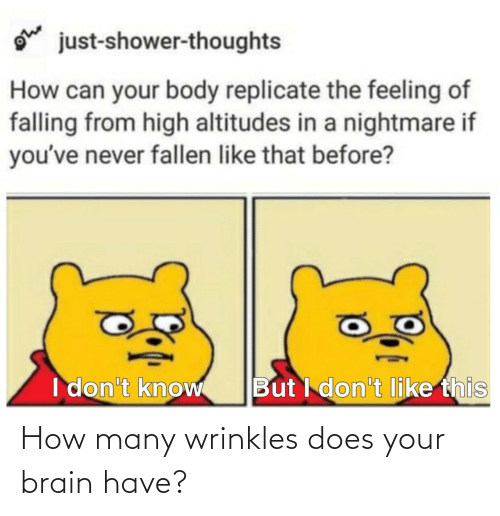 Does: How many wrinkles does your brain have?