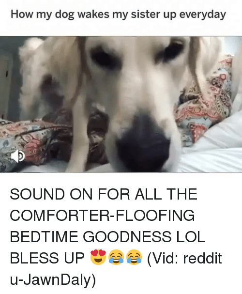 Bless Up, Lol, and Memes: How my dog wakes my sister up everyday SOUND ON FOR ALL THE COMFORTER-FLOOFING BEDTIME GOODNESS LOL BLESS UP 😍😂😂 (Vid: reddit u-JawnDaly)