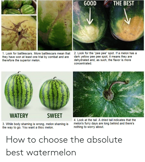 Absolute: How to choose the absolute best watermelon