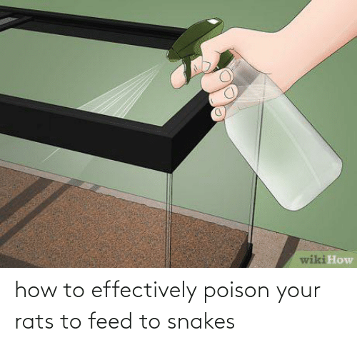 poison: how to effectively poison your rats to feed to snakes