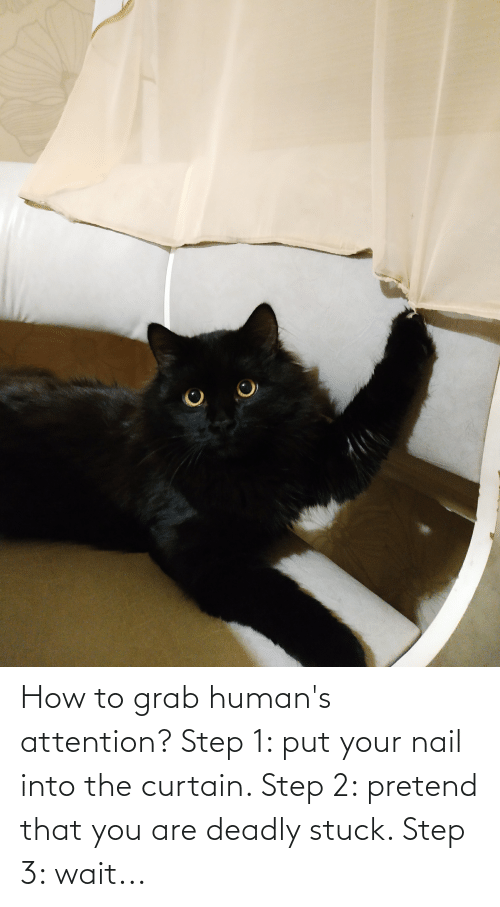 Step 3: How to grab human's attention? Step 1: put your nail into the curtain. Step 2: pretend that you are deadly stuck. Step 3: wait...