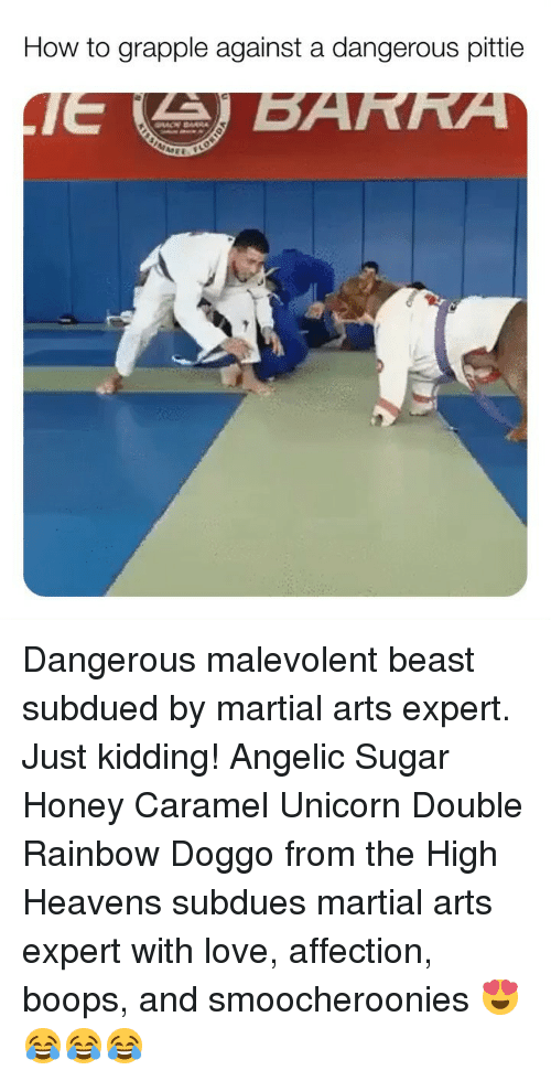Love, Memes, and How To: How to grapple against a dangerous pittie Dangerous malevolent beast subdued by martial arts expert. Just kidding! Angelic Sugar Honey Caramel Unicorn Double Rainbow Doggo from the High Heavens subdues martial arts expert with love, affection, boops, and smoocheroonies 😍😂😂😂