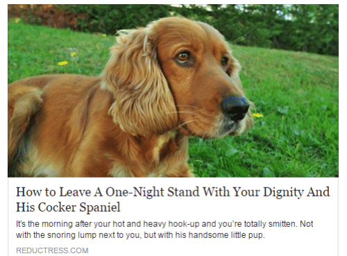 How To, Hook, and Pup: How to Leave A One-Night Stand With Your Dignity And  His Cocker Spaniel  It's the morning after your hot and heavy hook-up and you're totally smitten. Not  with the snoring lump next to you, but with his handsome little pup.  REDUCTRESS.COM