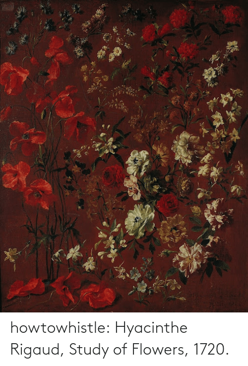 Study Of: howtowhistle:  Hyacinthe Rigaud, Study of Flowers, 1720.