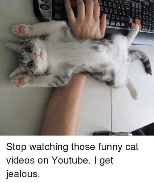 Image of: Laugh Jealous Memes And Hraa 44 Stop Watching Those Funny Cat Ballmemescom 25 Best Memes About Funny Cats Videos Funny Cats Videos Memes
