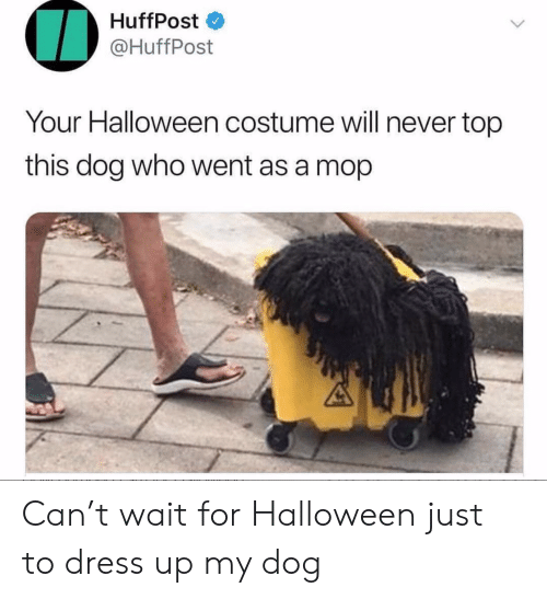 Halloween, Dress, and Never: HuffPost  @HuffPost  Your Halloween costume will never top  this dog who went as a mop Can't wait for Halloween just to dress up my dog