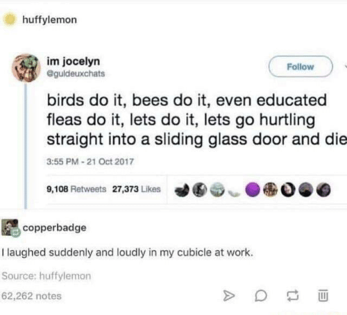 Educated: huffylemorn  im jocelyn  Follow  @guldeuxchats  birds do it, bees do it, even educated  fleas do it, lets do it, lets go hurtling  straight into a sliding glass door and die  3:55 PM 21 Oct 2017  ●  9,108 Retweets 27,373 Likes  ︶  copperbadge  I laughed suddenly and loudly in my cubicle at work.  Source: huffylemon  62,262 notes