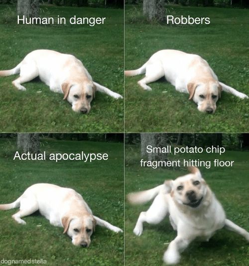 hitting: Human in danger  Robbers  Small potato chip  Actual apocalypse  fragment hitting floor  dognamedstella