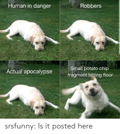 actual: Human in danger  Robbers  Small potato chip  Actual apocalypse  fragment hitting floor srsfunny:  Is it posted here