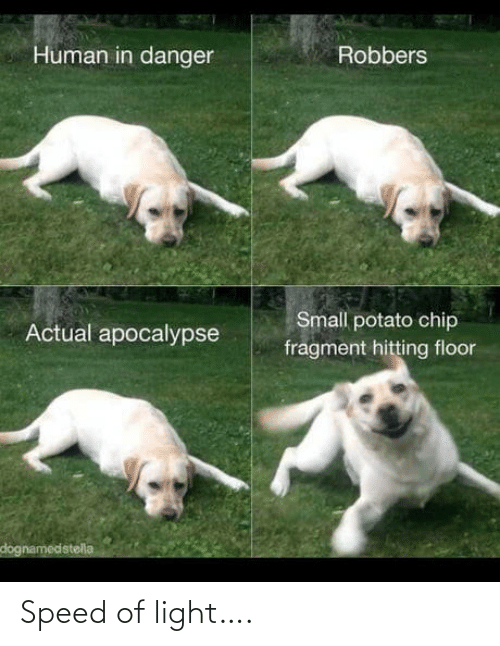 actual: Human in danger  Robbers  Small potato chip  Actual apocalypse  fragment hitting floor  dognamedstella Speed of light….