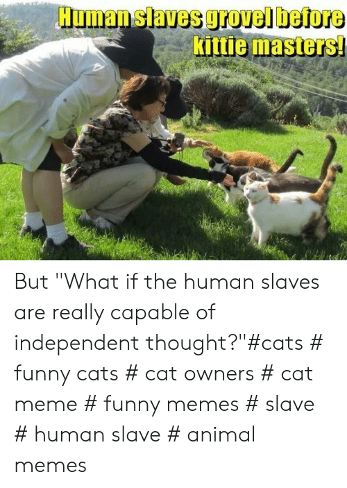 "funny cats: Human slaves grovel before  Kittie masters But ""What if the human slaves are really capable of independent thought?""#cats # funny cats # cat owners # cat meme # funny memes # slave # human slave # animal memes"