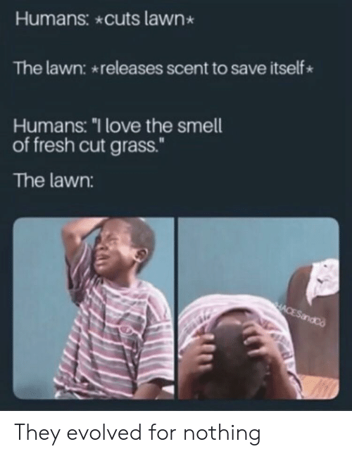 """Fresh, Love, and Smell: Humans: cuts lawn  The lawn: releases scent to save itself  Humans: """"I love the smell  of fresh cut grass.""""  The lawn:  HACESandCo They evolved for nothing"""