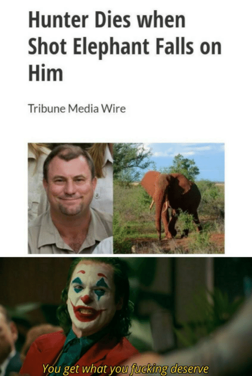 You Fucking: Hunter Dies when  Shot Elephant Falls on  Him  Tribune Media Wire  You get what you fucking deserve
