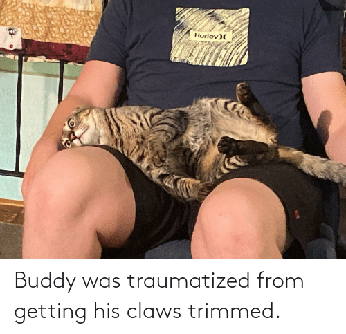 buddy: Hurley)( Buddy was traumatized from getting his claws trimmed.
