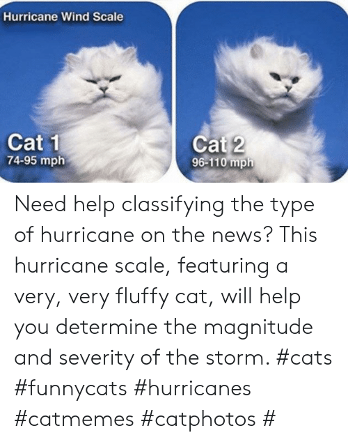 Hurricane: Hurricane Wind Scale  Cat 1  74-95 mph  Cat 2  96-110 mph Need help classifying the type of hurricane on the news? This hurricane scale, featuring a very, very fluffy cat, will help you determine the magnitude and severity of the storm. #cats #funnycats #hurricanes #catmemes #catphotos #