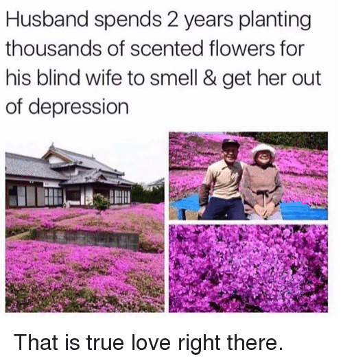 Love, Smell, and True: Husband spends 2 years planting  thousands of scented flowers for  his blind wife to smell & get her out  of depression That is true love right there.