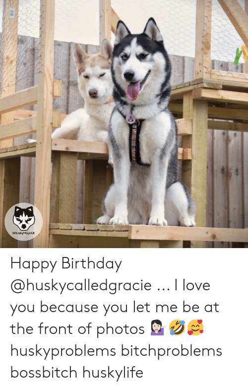 Birthday, Love, and Memes: @HuskyMayaUK Happy Birthday @huskycalledgracie ... I love you because you let me be at the front of photos 💁🏻‍♀️🤣🥰 huskyproblems bitchproblems bossbitch huskylife