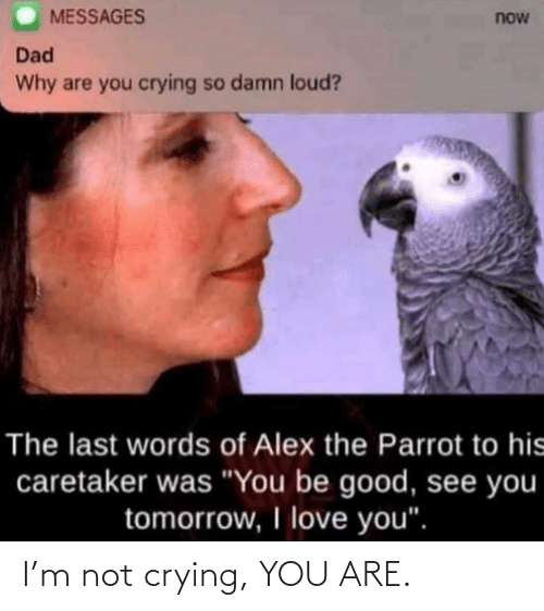 Crying: I'm not crying, YOU ARE.