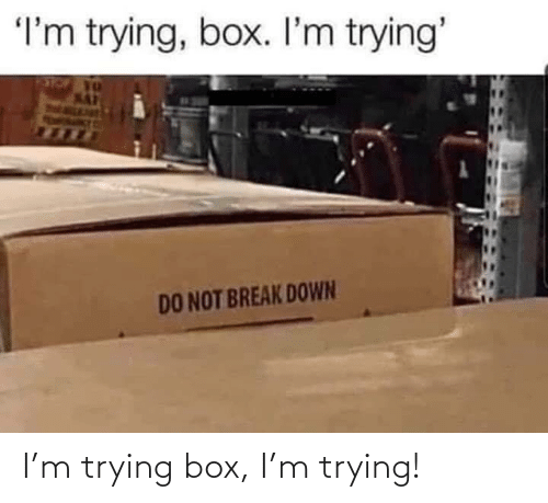 Box, Trying, and M: I'm trying box, I'm trying!