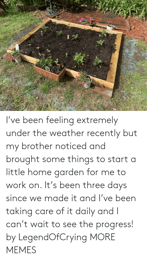 brother: I've been feeling extremely under the weather recently but my brother noticed and brought some things to start a little home garden for me to work on. It's been three days since we made it and I've been taking care of it daily and I can't wait to see the progress! by LegendOfCrying MORE MEMES
