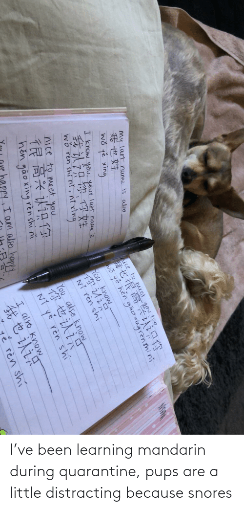 Distracting: I've been learning mandarin during quarantine, pups are a little distracting because snores