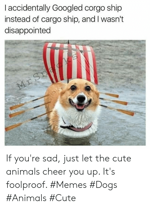Animals, Cute, and Cute Animals: I accidentally Googled corgo ship  instead of cargo ship, and I wasn't  disappointed  Mr Sna If you're sad, just let the cute animals cheer you up. It's foolproof. #Memes #Dogs #Animals #Cute
