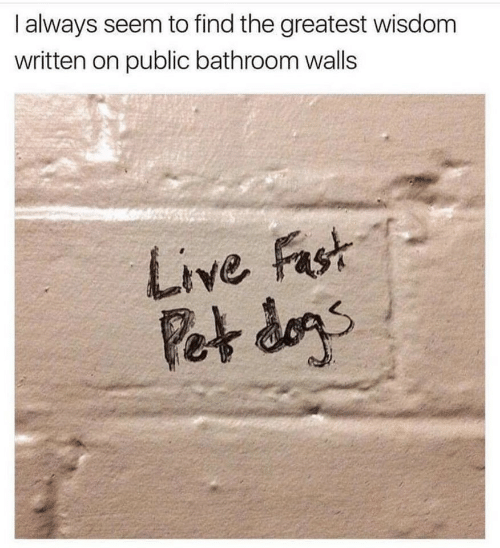 dans: I always seem to find the greatest wisdom  written on public bathroom walls  Live Fast  Pet dans