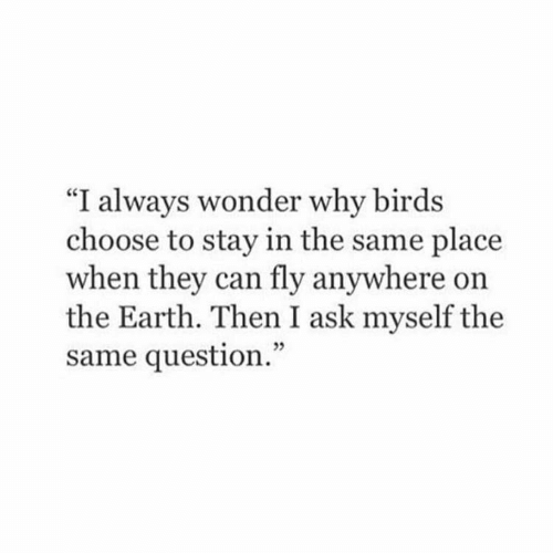 """Birds: """"I always wonder why birds  choose to stay in the same place  when they can fly anywhere on  the Earth. Then I ask myself the  same question."""""""