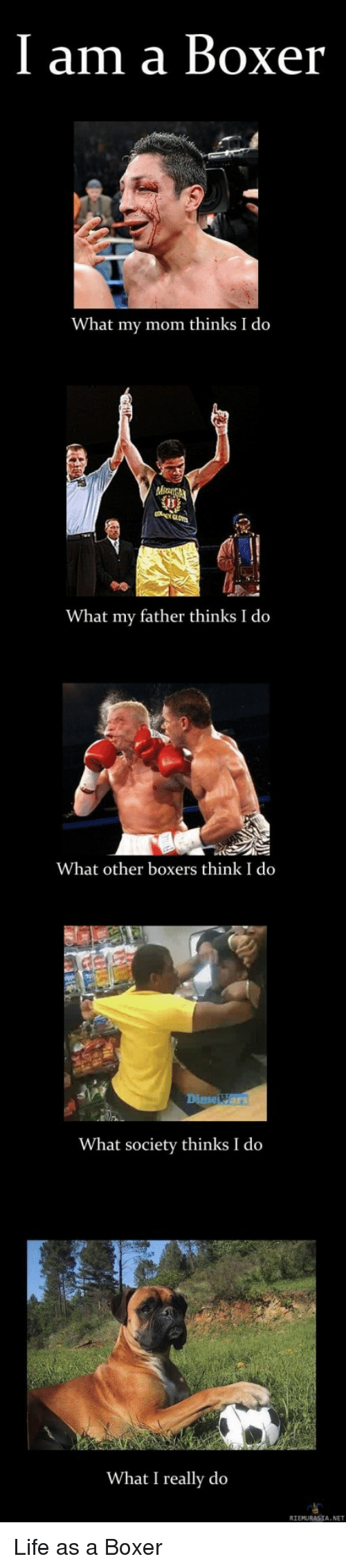 Life, Boxer, and What I Really Do: I am a Boxer  What my mom thinks I do  What my father thinks I do  What other boxers think I do  Dime Wars  What society thinks I do  What I really do  RIEMURASIA. NET Life as a Boxer