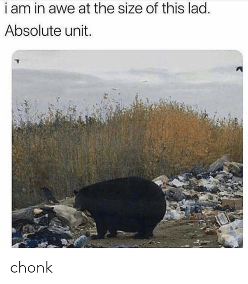 awe: i am in awe at the size of this lad.  Absolute unit. chonk