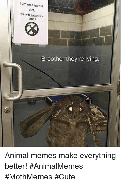 Cute, Memes, and Animal: I am on a special  diet  Please do not pive me  amps  Brööther they're lying. Animal memes make everything better! #AnimalMemes #MothMemes #Cute