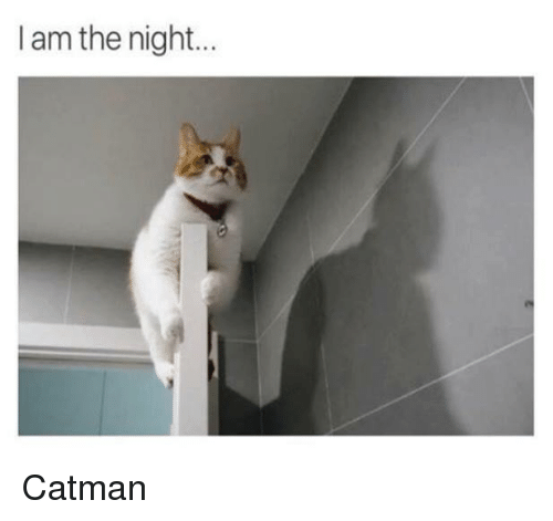 I Am The Night: I am the night... Catman