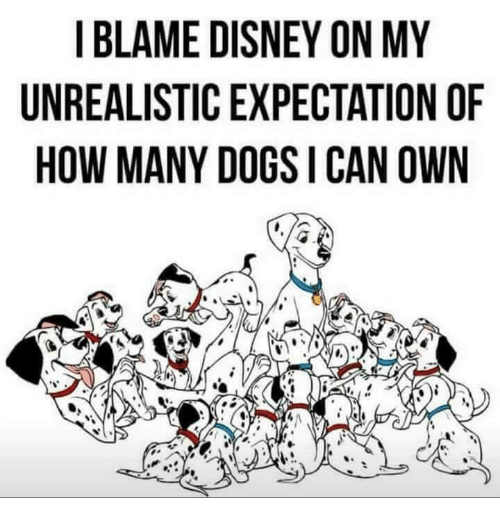 Disney, Dogs, and How: I BLAME DISNEY ON MY  UNREALISTIC EXPECTATION OF  HOW MANY DOGS I CAN OWN