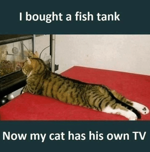 Memes, Fish, and 🤖: I bought a fish tank  Now my cat has his own TV  AMPWH
