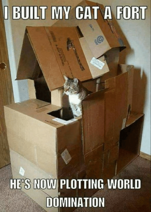 Plotting: I BUILT MY CAT A FORT  HES NOWI PLOTTING WORL  DOMINATION