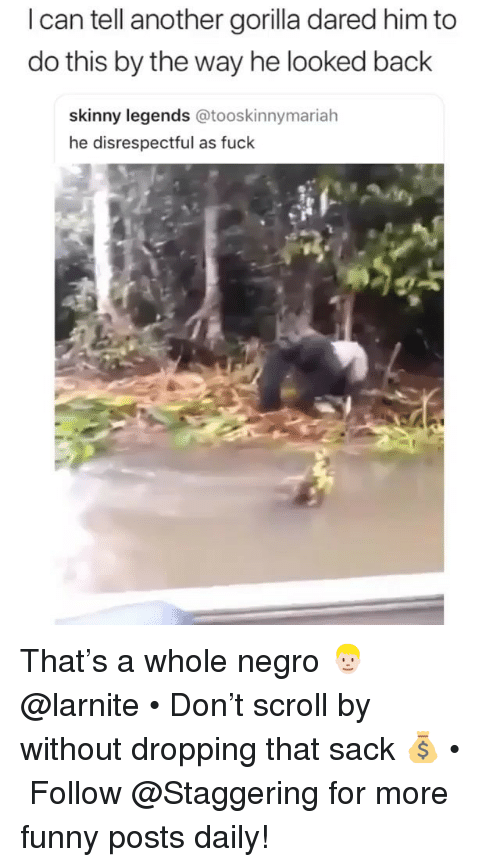Funny, Skinny, and Fuck: I can tell another gorilla dared him to  do this by the way he looked back  skinny legends @tooskinnymariah  he disrespectful as fuck That's a whole negro 👱🏻♂️ @larnite • Don't scroll by without dropping that sack 💰 • ➫➫➫ Follow @Staggering for more funny posts daily!