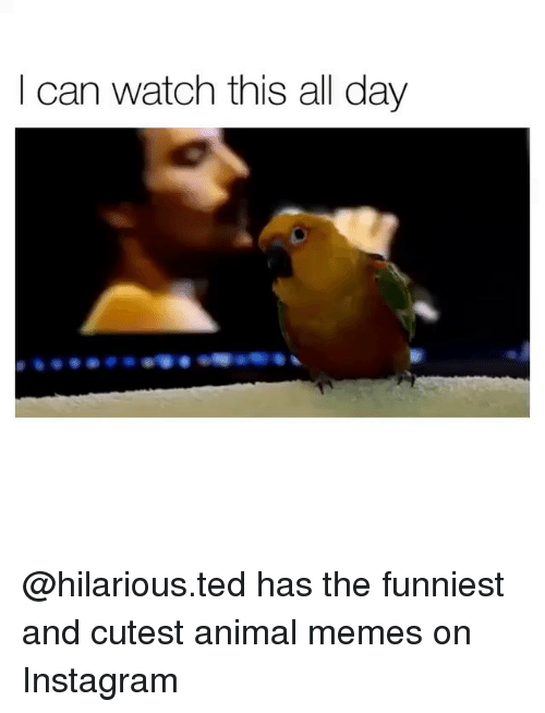 Instagram Memes And Ted I Can Watch This All Day Hilarious