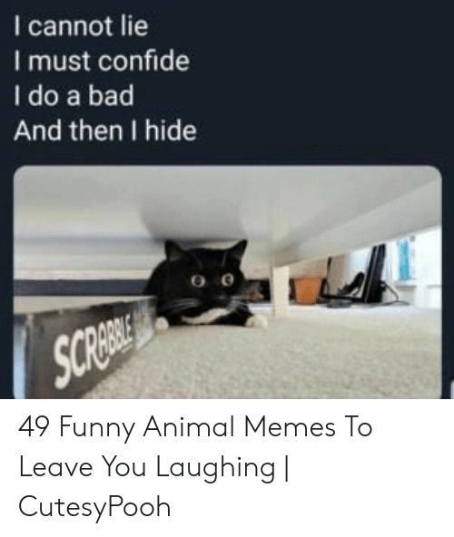 funny animal memes: I cannot lie  I must confide  I do a bad  And then I hide  SCREBOL 49 Funny Animal Memes To Leave You Laughing   CutesyPooh