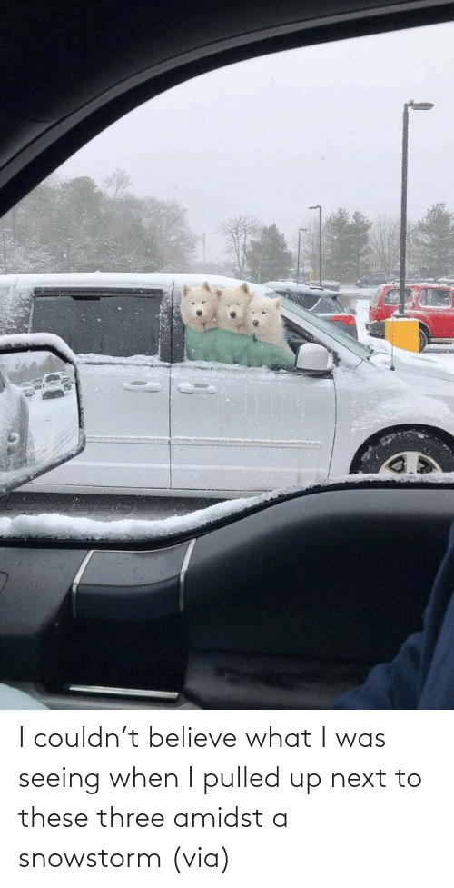 Aww, Reddit, and Target: I couldn't believe what I was seeing when I pulled up next to these three amidst a snowstorm (via)