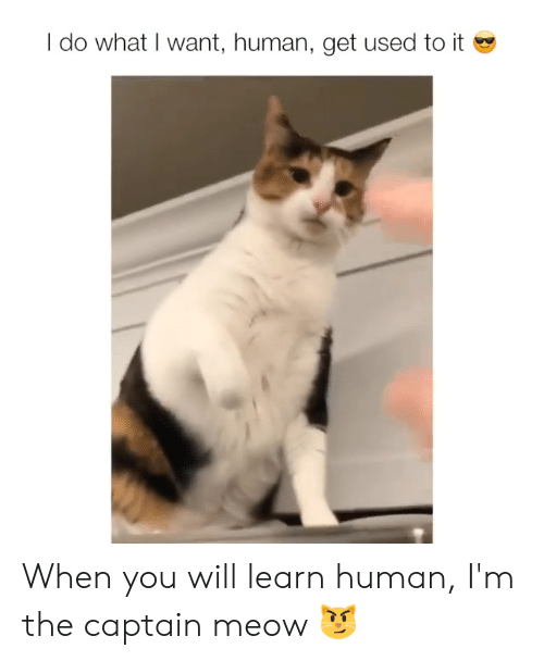 Memes, 🤖, and Human: I do what I want, human, get used to it When you will learn human, I'm the captain meow 😼