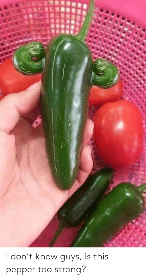 Strong: I don't know guys, is this pepper too strong?