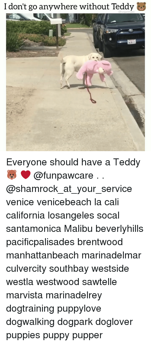 malibu: I don't go anywhere without Teddy Everyone should have a Teddy 🐻 ❤️ @funpawcare . . @shamrock_at_your_service venice venicebeach la cali california losangeles socal santamonica Malibu beverlyhills pacificpalisades brentwood manhattanbeach marinadelmar culvercity southbay westside westla westwood sawtelle marvista marinadelrey dogtraining puppylove dogwalking dogpark doglover puppies puppy pupper