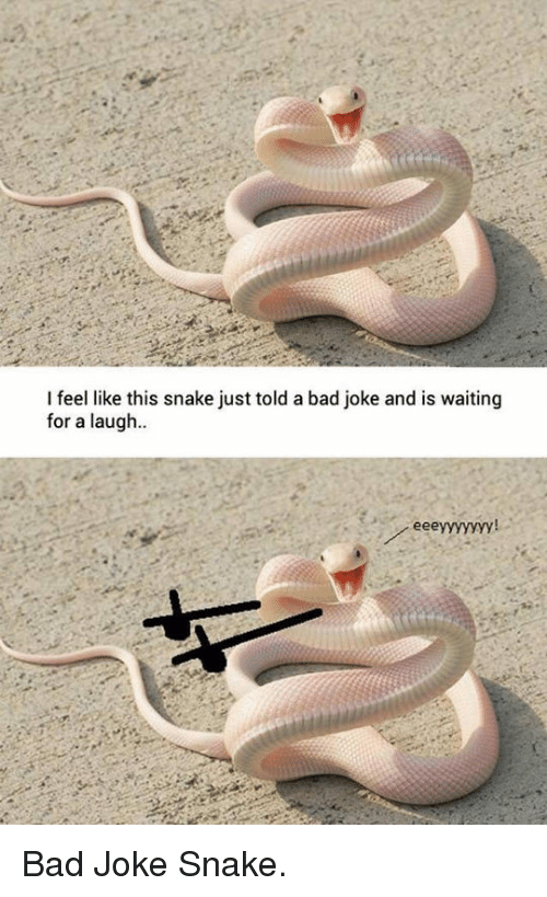 A Bad Joke: I feel like this snake just told a bad joke and is waiting  for a laugh  ее <p>Bad Joke Snake.</p>