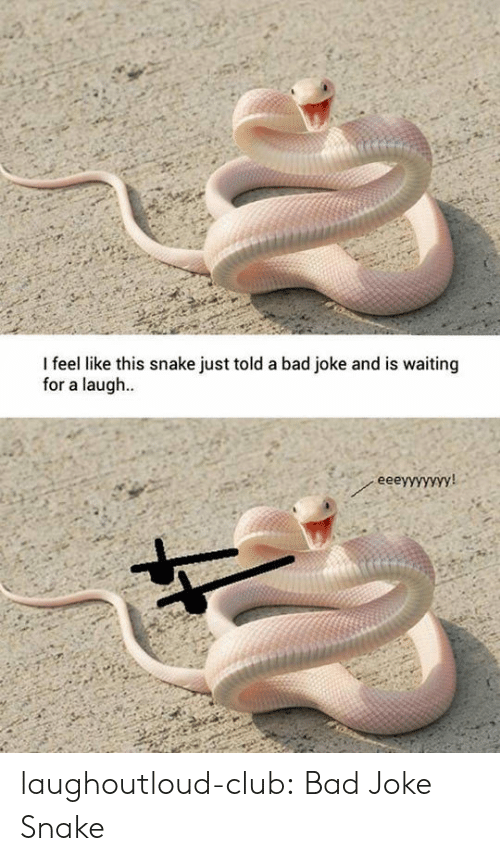 A Bad Joke: I feel like this snake just told a bad joke and is waiting  for a laug..  еееуyууууу! laughoutloud-club:  Bad Joke Snake