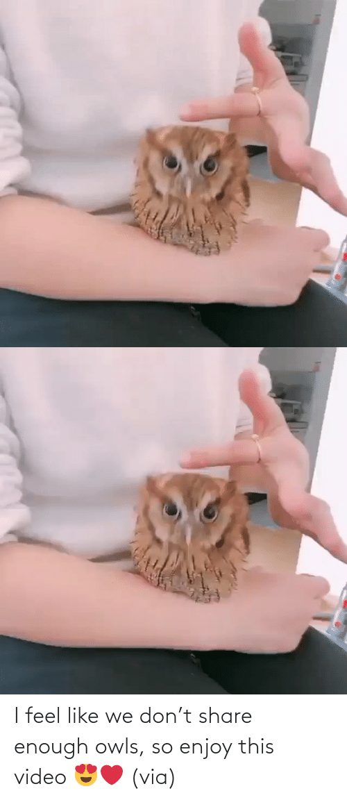 feel like: I feel like we don't share enough owls, so enjoy this video 😍❤️ (via)
