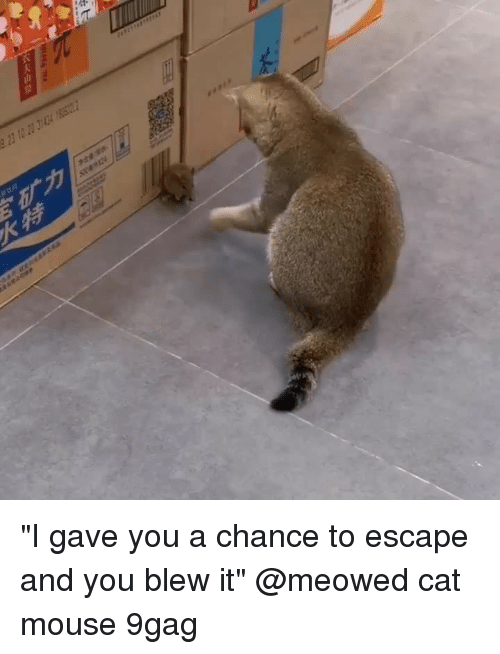 """9gag, Memes, and Mouse: """"I gave you a chance to escape and you blew it""""⠀ @meowed cat mouse 9gag"""