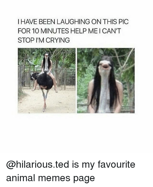 Memes Page: I HAVE BEEN LAUGHING ON THIS PIC  FOR 10 MINUTES HELP MEICAN'T  STOP I'M CRYING @hilarious.ted is my favourite animal memes page