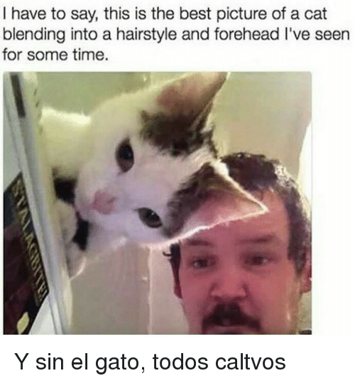 hairstyle: I have to say, this is the best picture of a cat  blending into a hairstyle and forehead I've seen  for some time. Y sin el gato, todos caltvos
