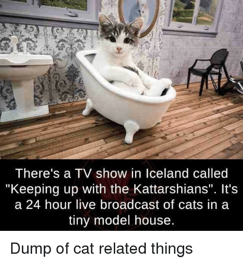 """Cats, House, and Live: I here's a IV show in lceland called  """"Keeping up with the Kattarshians"""". It's  a 24 hour live broadcast of cats in a  tiny model house. Dump of cat related things"""